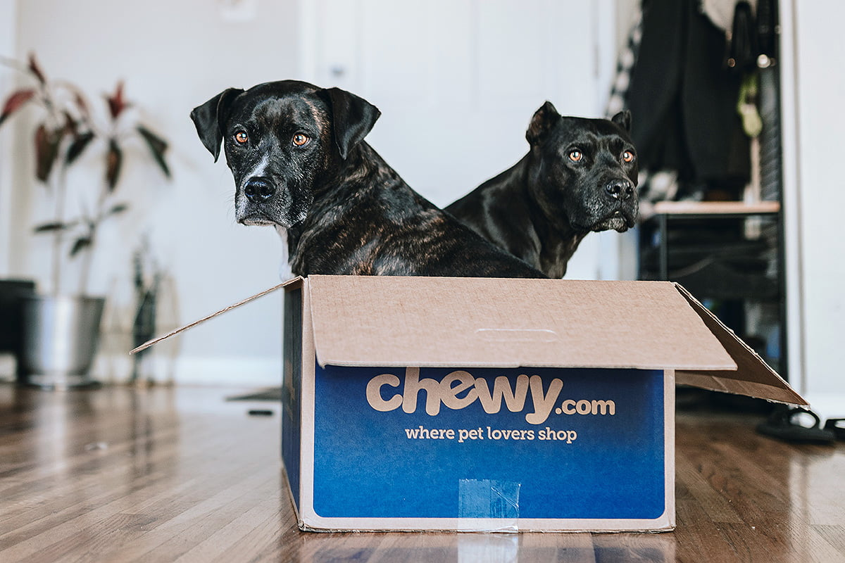 Tips on Moving to a New Home with Pets