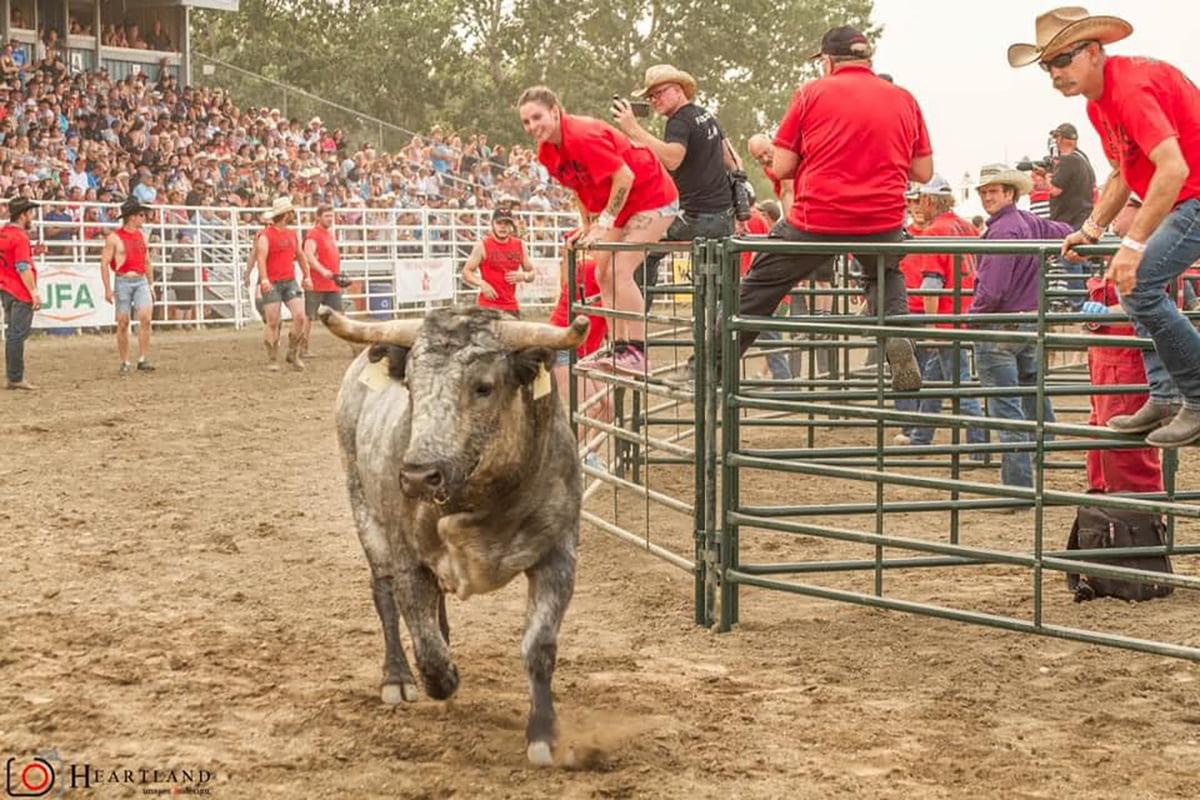 Benchmark and Bulls